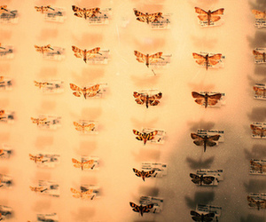 beautiful, butterflies, and hipster image