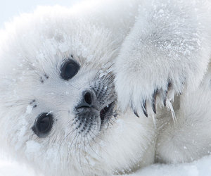 cute animals, seal, and pup image