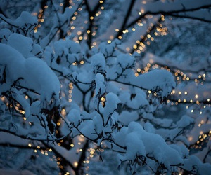 branches, glow, and light image
