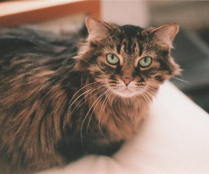 cat, vintage, and eyes image