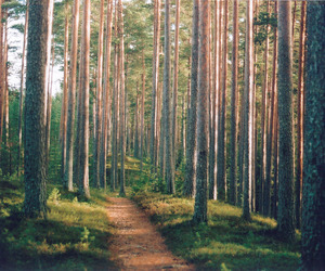 forest and green image