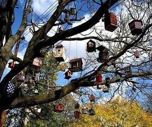 birdhouse, tree, and birds image