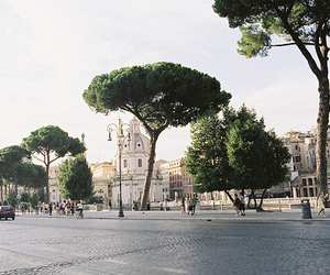city, tree, and rome image