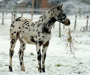 horse, snow, and foal image