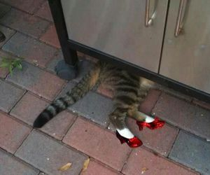 cat, funny, and red image