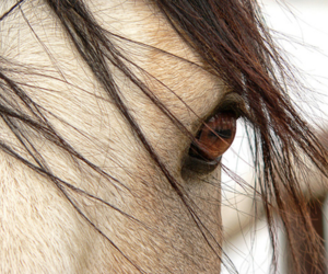 beautiful, horse, and pretty image