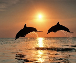 dolphin, sunset, and sea image