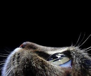 cat, eye, and eyes image