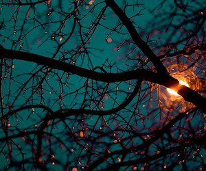 amazing, beautiful, and branches image