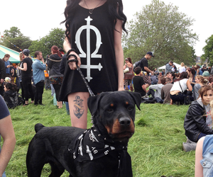 dog, girl, and tattoo image