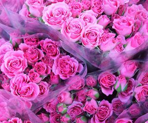 bunches, nature, and roses image