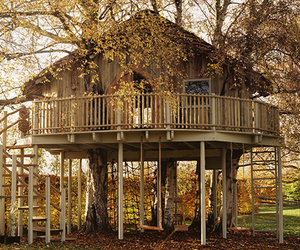 house, treehouse, and nature image