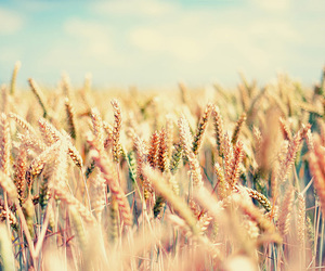 nature, summer, and field image