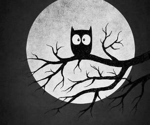 owl, night, and moon image