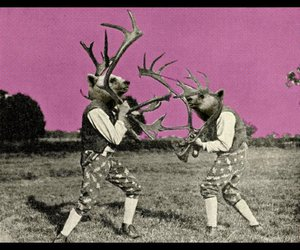 antlers, bears, and weird image
