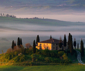 fog, italy, and trees image
