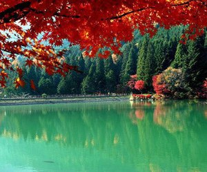 autumn, nature, and japan image