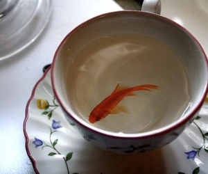 fish, cup, and vintage image