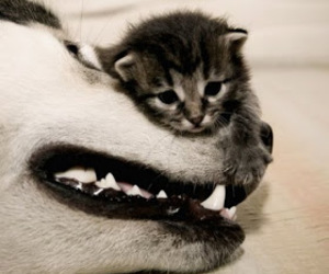 baby, dog, and kitten image