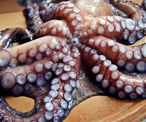 octopus, water, and strange image