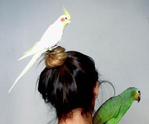 animals, beautiful, and blondie image