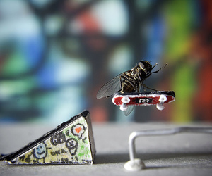skate, fly, and cool image