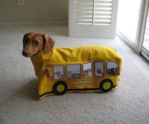 dog, bus, and funny image