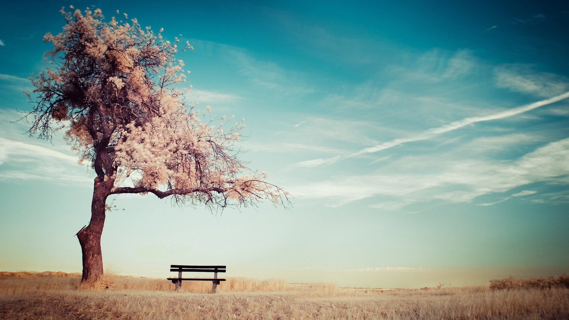 Enjoyable Nature Cherry Blossoms Trees Bench Chairs Wallpaper Inzonedesignstudio Interior Chair Design Inzonedesignstudiocom