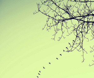 birds, branches, and explore image