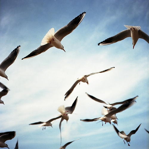 birds, blue, and seagulls image