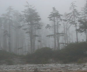 forest, pale, and fog image