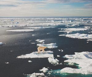 bear, ice, and Polar Bear image