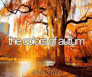 autumn, orange, and autum image