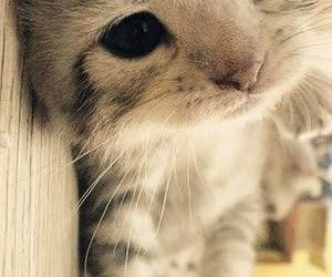 Dream, eyes, and kitty image