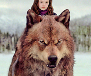 twilight, wolf, and jacob image