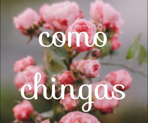 como chingas, flowers, and pink image