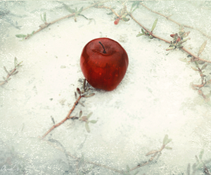 snow and apple image