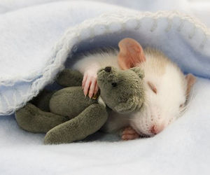 cute, mouse, and animal image