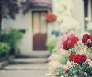 flowers, rose, and nature image
