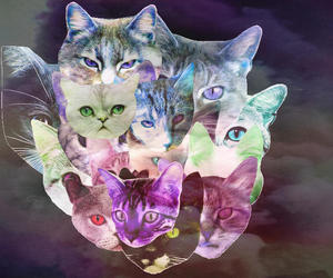 cat, cats, and grey image