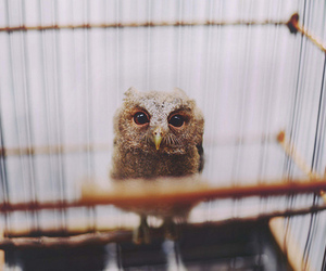 owl, cute, and photography image