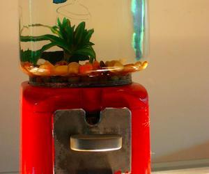 fish, fish tank, and aquarium image