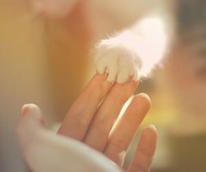 cat, hand, and paws image
