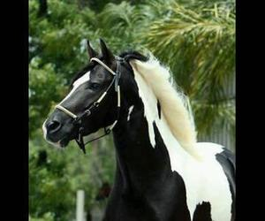 beauty, breed, and horses image