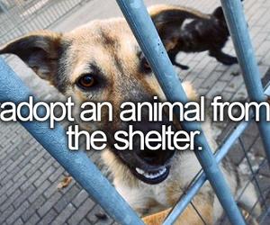 adopt, animal, and bb image