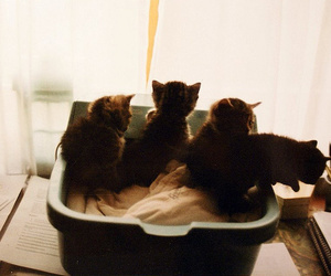 cat, cute, and kittens image