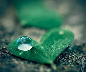 heart, drop, and green image