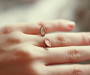 ring, wings, and photography image