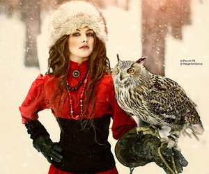 owl, red, and snow image