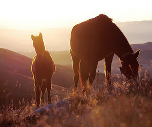 horse, beautiful, and nature image